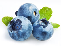 Bilberry on a white Stock Image