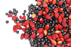 Bilberry and wild strawberry Stock Image