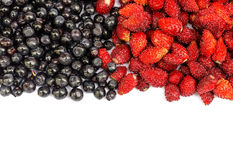 Bilberry and wild strawberry Stock Images