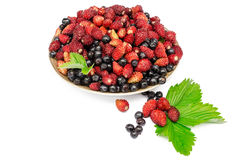 Bilberry and wild wild strawberry in a plate Royalty Free Stock Photos