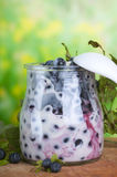 Bilberry  yoghurt Stock Images