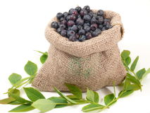 Bilberrys royalty free stock image