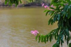 Bild av blommor Fotografering för Bildbyråer