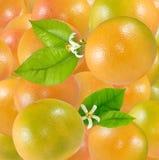 Bild av closeupen för många den läckra mogna apelsiner royaltyfria bilder