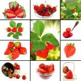 Bild av closeupen för många jordgubbar arkivbilder