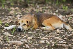Bild av den bruna hunden arkivbilder