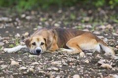 Bild av den bruna hunden royaltyfria bilder