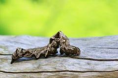 Bild av den bruna larven på torr timmer för brunt kryp Arkivbilder