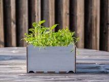 Bild av den fyrkantiga asken med gröna gras på en trätabell, stads- arbeta i trädgården arkivfoto