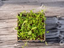 Bild av den fyrkantiga asken med gr?na gras p? en tr?tabell, stads- arbeta i tr?dg?rden royaltyfria bilder