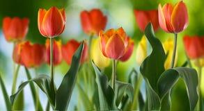 Bild av den härliga blommanärbilden Arkivfoton