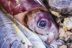 Bild av den röda tioarmade bläckfisken som är till salu i marknad fotografering för bildbyråer