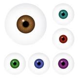 Bild av den realistiska bollen för mänskligt öga med den färgrika eleven, iris Vektorillustration som isoleras på vit bakgrund Royaltyfria Foton