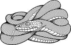 Bild av den rullade ihop ormen Arkivfoto