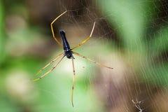 Bild av den svarta Orb-vävare spindeln royaltyfri foto