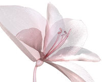 Bild av en blomma som isoleras på vit, Amaryllis stock illustrationer