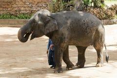 Bild av en elefant och en mahout på naturbakgrund royaltyfri fotografi