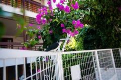Bild av en gullig duva på ett staket fotografering för bildbyråer