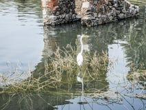 Bild av en häger i en flod med torra borste- och tegelstenpelare i bakgrunden arkivfoto