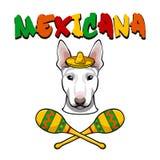 Bild av en hund bull terrier som bär i sombrero med maracas också vektor för coreldrawillustration royaltyfri illustrationer