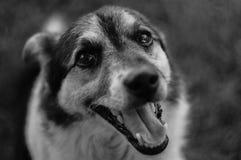 Bild av en hund i svartvitt Royaltyfri Fotografi