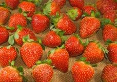 Bild av en mogen jordgubbe på en vit bakgrund Arkivbilder
