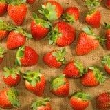 Bild av en mogen jordgubbe på en vit bakgrundscloseup Royaltyfria Foton