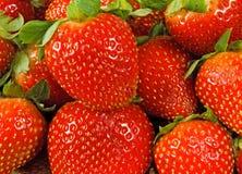 Bild av en mogen jordgubbe på en vit bakgrund Royaltyfria Bilder