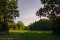 Bild av en röjning i en skog med träd på sidorna och sken Royaltyfri Fotografi