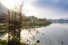 Bild av en svan på en sjö Royaltyfria Bilder