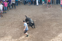 Bild av en tjur på gatan Royaltyfria Foton