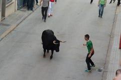 Bild av en tjur på gatan Arkivbilder