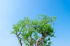 Bild av en tr?dfilial med en himmel som bakgrunden arkivbild