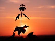 Bild av en v?xtkontur under solnedg?ng arkivfoto