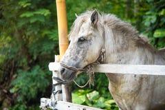 Bild av en vit häst, vit vildhäst arkivbilder