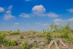 Bild av ett kontrollerat kalhuggit område i skogen arkivfoton
