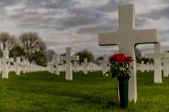 Bild av ett kors med en vas med röda rosor i den amerikanska kyrkogården Margraten royaltyfri fotografi