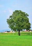 Bild av ett träd i parkera Royaltyfri Foto