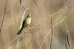 Bild av fåglar på filialen wild djur Arkivbild