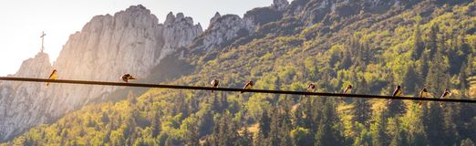 Bild av fåglar som sitter på en kraftledning med solnedgång och mountainlandscape i bakgrunden royaltyfri foto