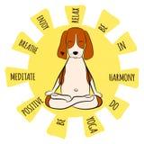 Bild av för hundbeagle för tecknad film ett roligt sammanträde på lotusblommaposition av yoga stock illustrationer