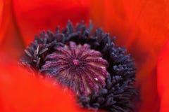 Bild av flora och faunor i makro Royaltyfri Fotografi