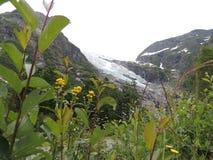 Bild av glaciären Arkivfoton