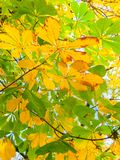 Bild av gula höstsidor royaltyfri fotografi
