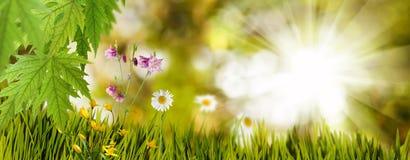 Bild av härliga blommor i den trädgårds- närbilden fotografering för bildbyråer