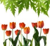 Bild av härliga blommor i parkera royaltyfria bilder