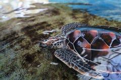 Bild av härliga den undervattens- havssköldpaddan Royaltyfri Fotografi