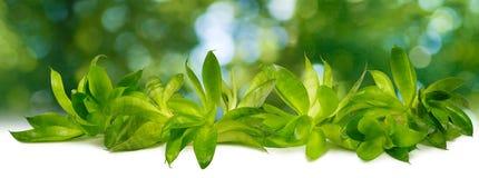 Bild av härliga växter på grön bakgrund Fotografering för Bildbyråer