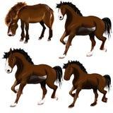 Bild av hästen. Arkivbild