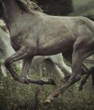 Bild av hästs kroppbeståndsdelar Arkivbilder